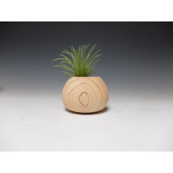 Small vessel from Thuja...